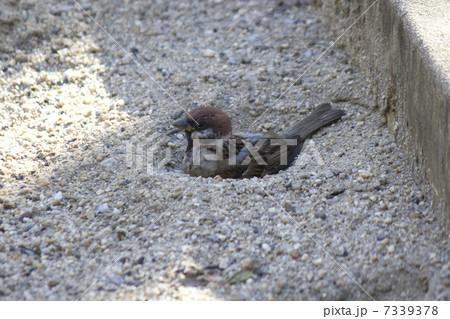 すずめ 砂場