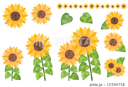 水彩風向日葵(ひまわり)イラストパーツセット イラストカット・ライン素材