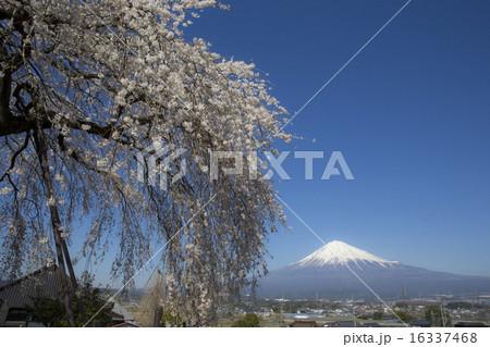 先照寺の写真素材 - PIXTA