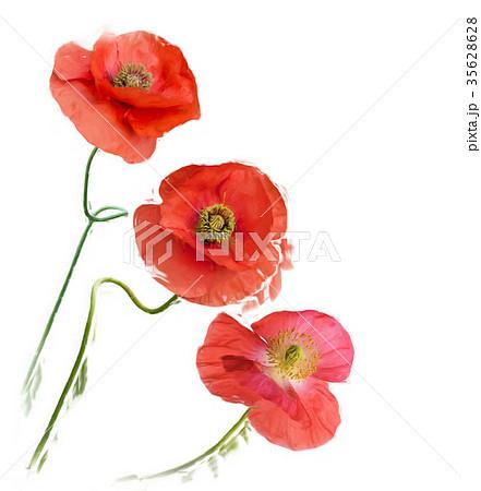 Poppy Flowers digital painting