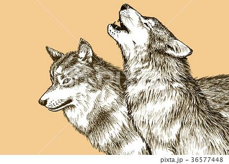 オオカミ狼のイラスト素材集 Pixtaピクスタ