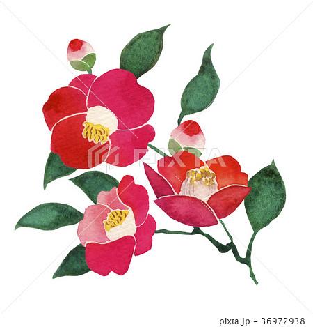 冬の花のイラスト素材集 Pixtaピクスタ